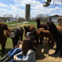 Enjoying alpacas - April 2015