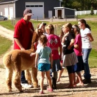 National Alpaca Farm Days 2014