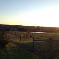 The Farm - Fall 2014