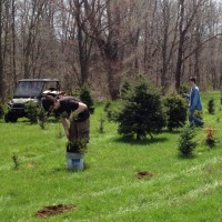 Steve & Nick planting trees