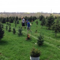 Darin & Gideon getting more trees to plant