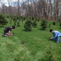 Steve & Nick planting trees by hand