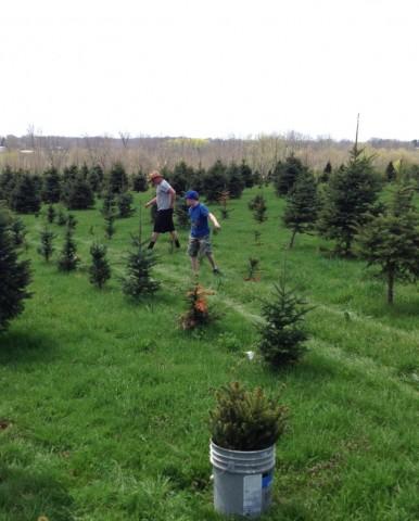 Darin & Gideon planting trees