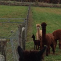 First look at Zoe's cria